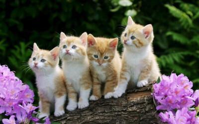 猫咪开心是什么样的,猫咪怎么表达惊喜