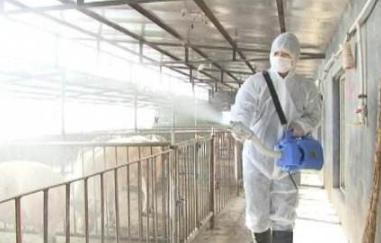 猪场消毒要达到好的效果?需要做到这五点