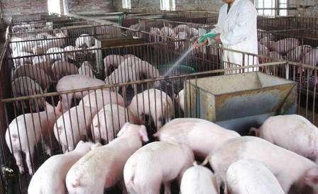 """猪价涨势遇冷,18元猪价梦落空?3个数据""""道出""""全年猪价走势"""