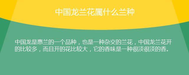 中国龙兰花属什么兰种