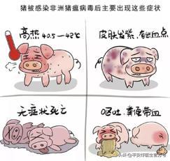 非洲猪瘟原来是这么回事,过年回家吃猪肉要注意