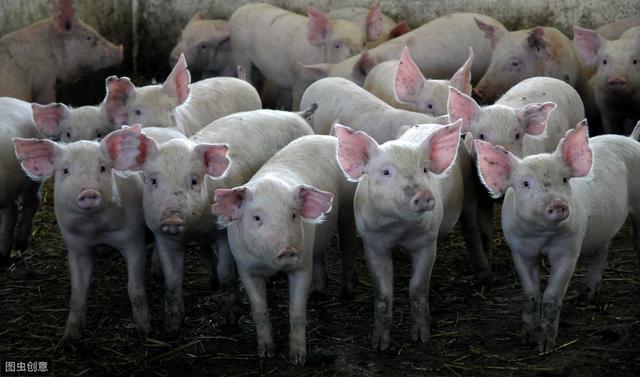因非洲猪瘟疫情已扑杀生猪119.3万头