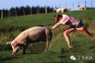 今日全国生猪价格行情