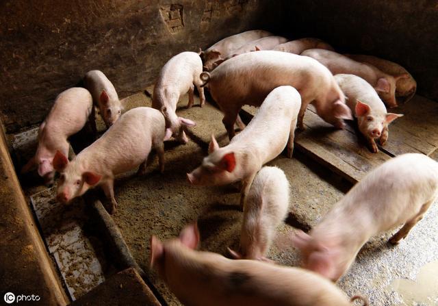 6省禁止生猪调运,南方恐进一步缺猪,专家:价格有望达到22元