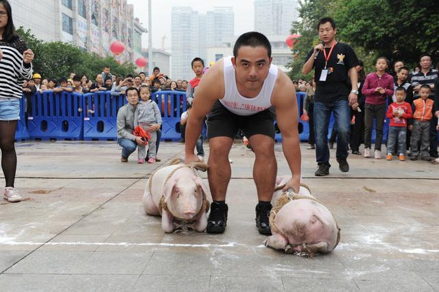生猪价格3涨12跌,为啥生猪紧缺但猪价止涨呢?附11月27日猪价