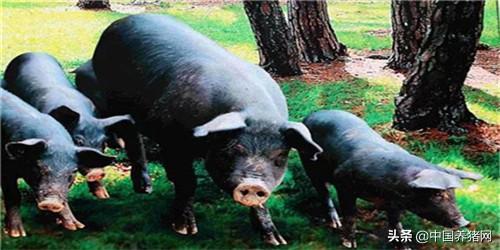 猪肉价格为何明显回落?媒体解读:国内供给保障,进口显著增加