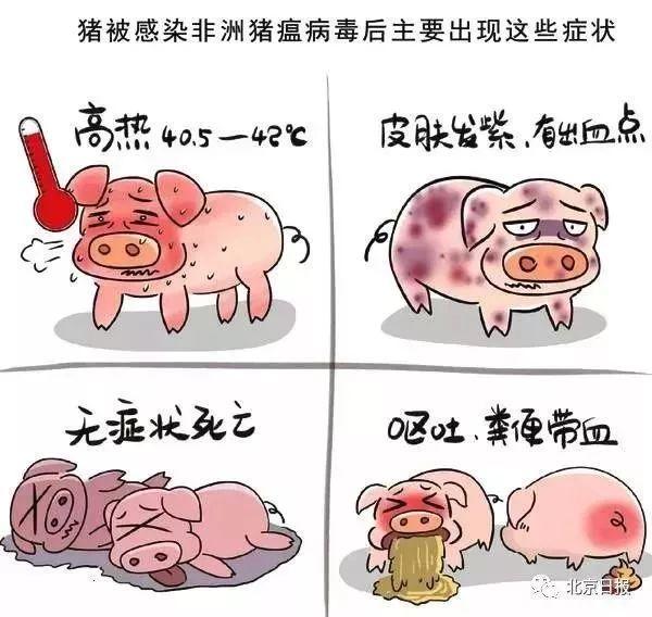 什么是非洲猪瘟?到底传不传染人?大家一起来了解